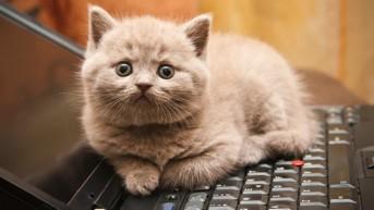 Cat Sitting on a Keyboard